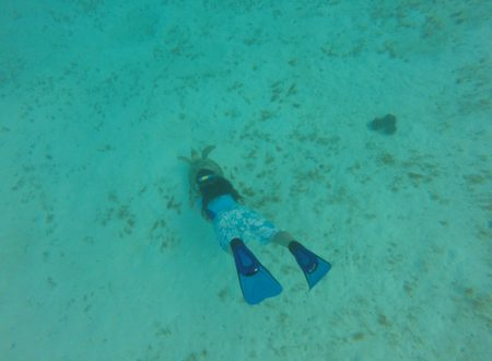 Sandy Island – Tobago Cays (Feb 5-Feb 9)